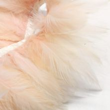 Pale Peach Hackle Feathers